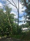 Na cyklostezce podél řeky Bílovky bránily cyklistům v projetí tři jasany.