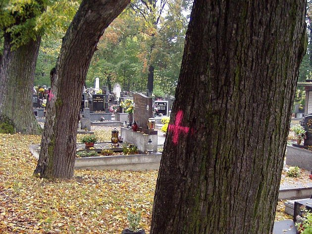 Lípy ke kácení ve hřbitovní aleji jsou již označeny červenými křížky.