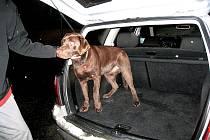 Zraněného nalezeného psa si nakonec nálezce Pavel Reissmann musí nějakou dobu nechat doma.