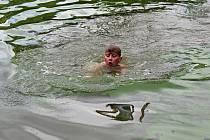 Otevřené místrovství ve skocích do výšky do vody uspořádali v pátek 5. července v Bítově.