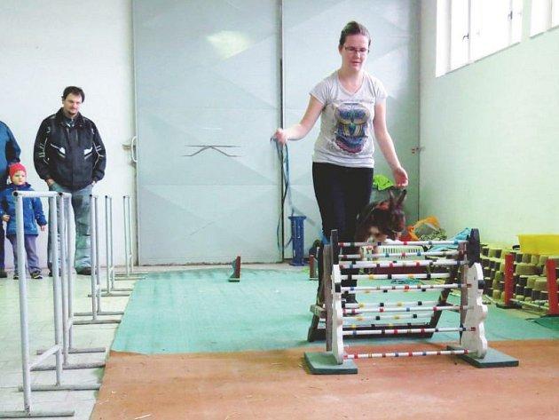 Králičí hop, to jsou sportovní disciplíny pro králíky. Na výstavě chovatelů ve Studénce ho předváděla také devatenáctiletá Monika Davidová ze Štěpánova u Olomouce.