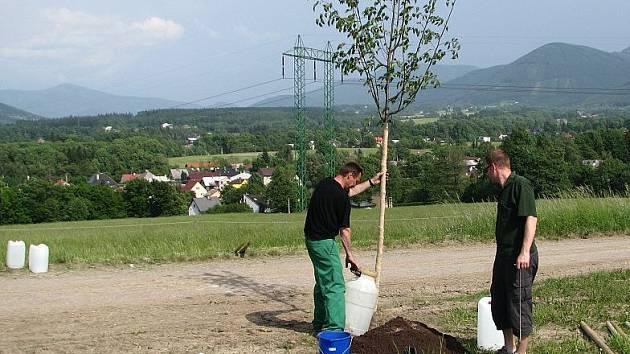 Sázení stromu, ilustrační foto.