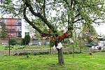 """Mateřská škola v Bílově má 75. výročí. K svátku matek tam na zahradě """"vyrostl"""" Láskovník."""