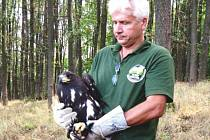 Orlice Dina 2 byla do volné přírody vypuštěna teprve letos v srpnu. Samice byla posledním mládětem, o které pečovala orlice Dina před svou smrtí.