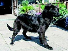 V současné době obývá útulek zhruba třináct psů různých ras.