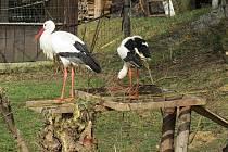 Chování některých živočichů v bartošovické stanici ve čtvrtek 25. února 2021 už naznačovalo příchod jara.