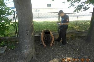 Nazí muži občas pobíhají i jinde, podobný případ řešili například i strážníci v Ústí nad Labem. Ilustrační foto.