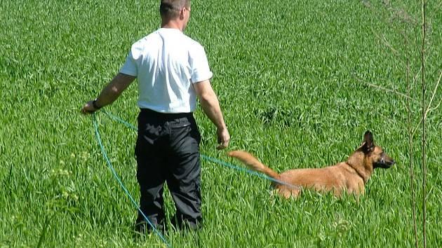 Výcvik psů patří ke každodennímu chlebíčku záchranářů, psovodů a dalších specialistů. Ilustrační foto.