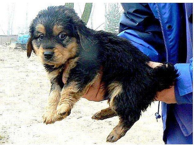 JEDNO Z PĚTI nalezených štěnat ve Studénce.