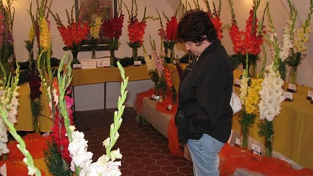 Na čtyři stovky exponátů gladiol, neboli mečíků, ve sto sedmdesáti druzích byly k vidění v sobotu a neděli v Žerotínském zámku v Novém Jičíně.