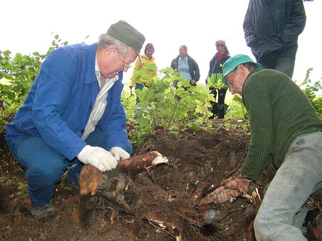 Sedlničtí dobrovolníci odhalili při výkopových pracích kamenné základy, které možná patřily altánu.