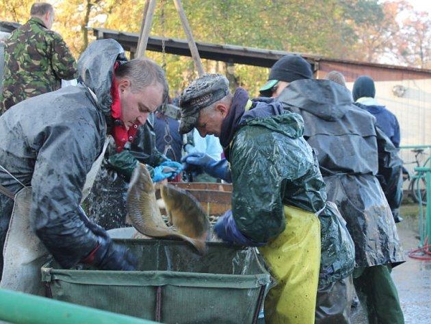 Oblíbenou podzimní tradicí jsou výlovy rybníků, které jsou nyní v plném proudu. V sobotu 19. října se uskutečnil výlov rybníku v Jeseníku nad Odrou, odkud pocházejí tyto snímky, ale i rybníku v Petřvaldě.