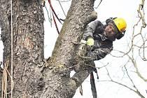 Ve Fulneku a Kopřivnici se rozhodli zbavit starých a nebezpečných stromů. Ilustrační foto.