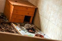 Přesně pět set ježků západních přijali v loňském roce pracovníci záchranné stanice v Bartošovicích. Ilustrační foto.