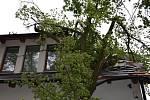 Spadlý strom v Kuníně