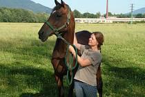 O koně Laténa, bývalého dostihového šampióna, nyní ve Frenštátě pečuje Lucie Bittnerová.