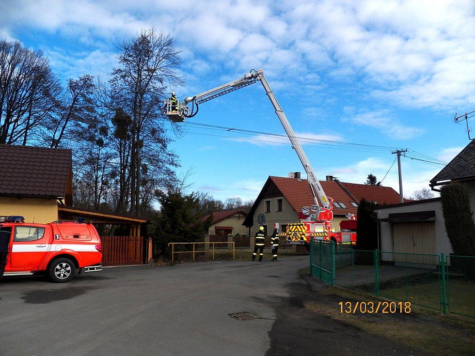 Vzrostlý jasan u rodinných domů v Lubině nebylo možné pokácet najednou.