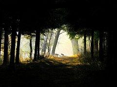 Oční studánka na Skalkách v Novém Jičíně. Ilustrační snímek.