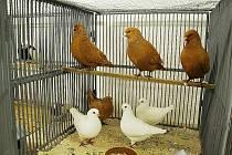 V sobotu 16. ledna proběhl v Bílovci již 44. oblastní aukční trh králíků doplněn o výstavu drůběže a exotického ptactva.