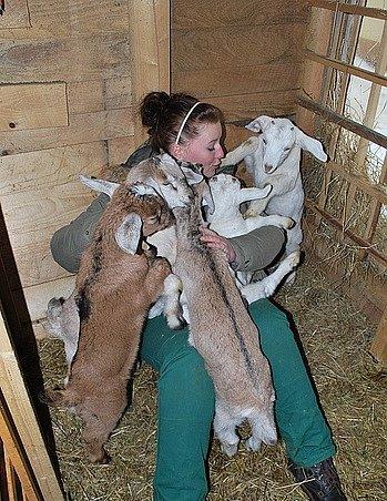 Chov koz je podle Jany Stránské nenáročný. Dnes si zjejich mléka dělá mimo jiné sýr.