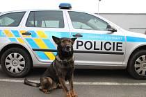 Devítiletý QVAR si připsal ve službách policie další vydařený zásah.