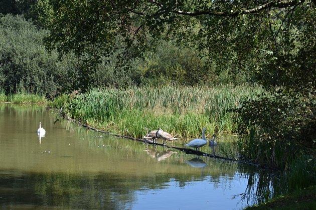 Zámecký rybník vTrnávce.