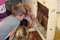 Jak vypadá život ve včelím úlu si nyní mohou prohlédnout novojičínští školáci v rámci výuky.