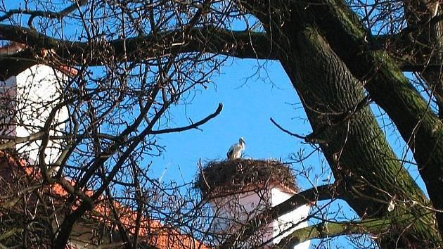Čáp Viktor usedá na komín zámku v Kuníně již po dlouhá léta a symbolicky tak zahajuje sezonu.