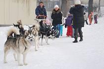 Zpestření v podobě psího spřežení se dočkaly děti z Mateřské školy Máj v Novém Jičíně.