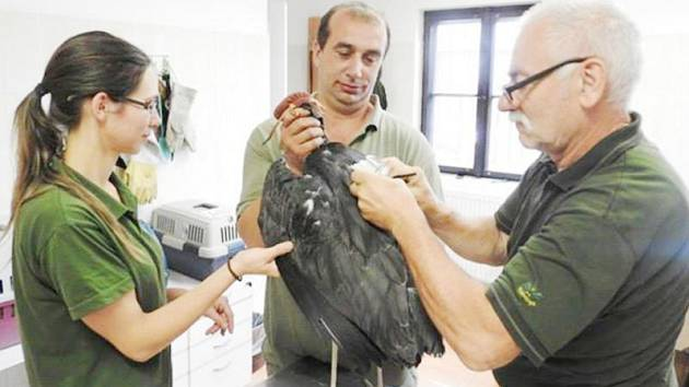 Stanici v Bartošovicích se daří vypouštět zvířata  do přírody.