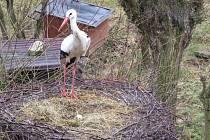 Snímek z čapího hnízda.