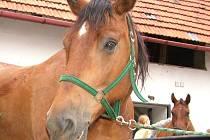 Nejen klíče nebo peněženky evidují obce na Novojičínsku ve ztrátách a nálezech. Občas se v evidenci objeví i kuriozita, například v podobě koně.