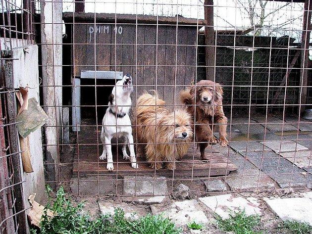 Útulek pro psy v Odrách. Ilustrační foto.