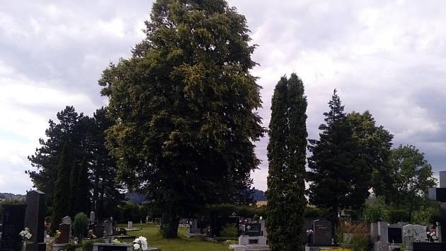Vzrostlé stromy na frenštátském hřbitově mohou způsobovat potíže. Jejich kořeny mohou prorůstat do hrobů.
