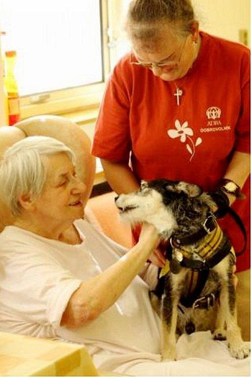 Kanisterapie patří k dobrovolnictví v Bílovci. V tamní nemocnici ji provádí Eliška Knězková se psem Nerem.