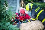Mohutný vyvrácený strom odstraňovali hasiči v Bravanticích.