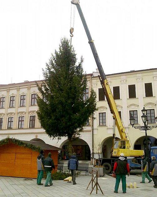 VÁNOČNÍ strom přivezli do Nového Jičína v pátek.