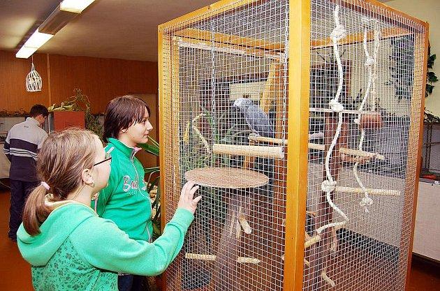 Papoušek šedý, žako, je velmi oblíbeným exotem.