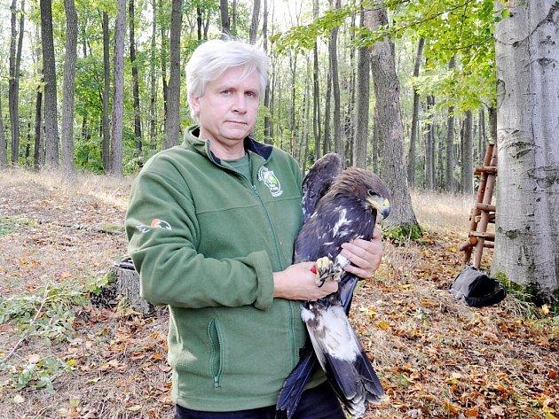 Petr Orel je jedním z těch, kteří se zasadili o návrat orla skalního do volné přírody.