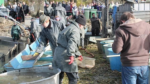 První velké vypouštění rybníka se o prvním listopadovém víkendu uskutečnilo v Bartošovicích. Druhý největší rybník v Moravskoslezském kraji se vypouštěl čtyři týdny.