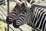 Zoo Hodoní