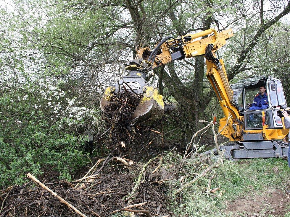 Bobři se zabydleli na Kyjovce. Vodohospodáře trápí nory, hráze i ohlodané stromy