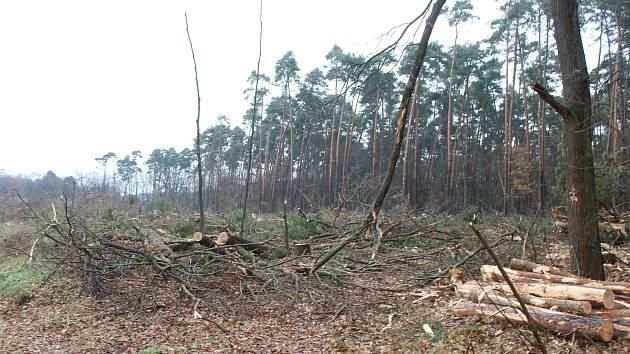 Těžba dřeva v Rohatci, v místní části Soboňky.