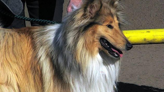 Psí soutěž Happy Dog Day 2011 v Bzenci.