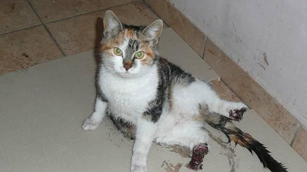 Kočka bude do smrti nepohyblivá