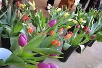 Jarní květinová výzdoba zámku v Miloticích.