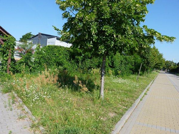 Vmnoha částech Hodonína se výška trávy blíží půl metru. To dělá problém jak alergikům, tak ipejskařům.