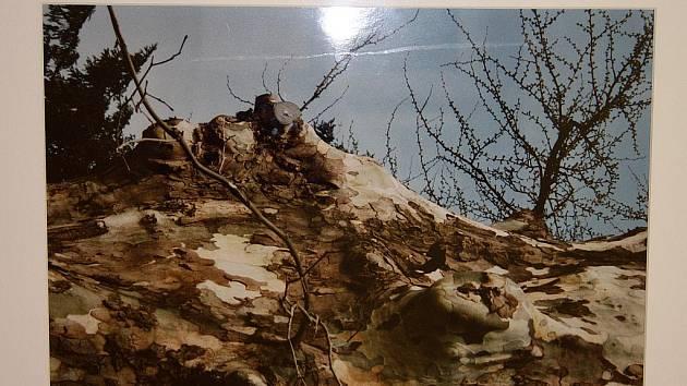 Z výstavy Poezie starých zdí a Stromy zblízka.