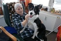 Fenka Meri pomáhá klientům veselské Zdislavy pomocí canisterapie.