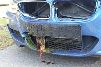 Deset srážek auta s lesní zvěří zadokumentovali za poslední týden policisté na Hodonínsku.
